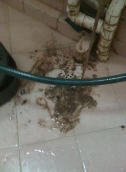 a puddle of brownish jelly purged out of an aircon condensate pipe