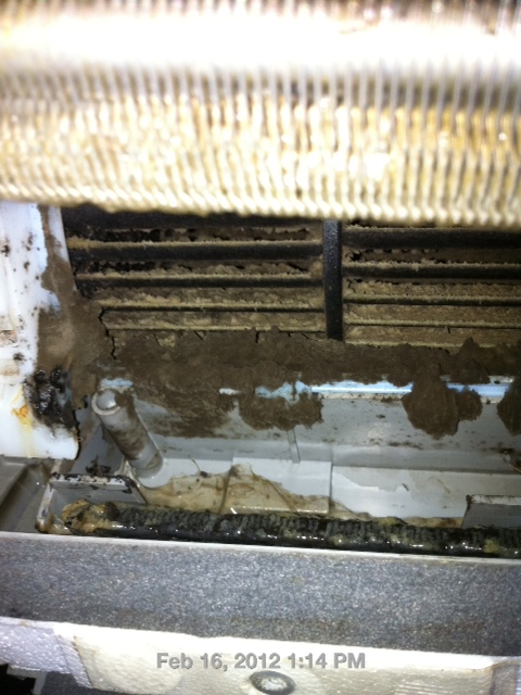 Mold in the internal parts of an aircon water tray and blower
