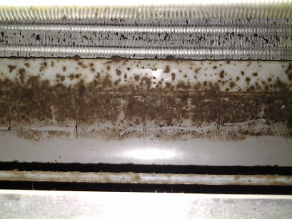 MOld at the back of aircon blower